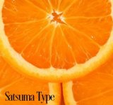SATSUMA TYPE WHIPPED SOAP