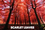 SCARLET LEAVES FRAGRANCE OIL